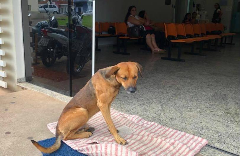 brazilian-hospital-dog-2-1543866414471.jpg