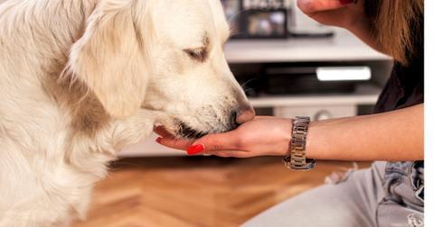 feeding-the-dog-picture-id530841897-1561485844895.jpg