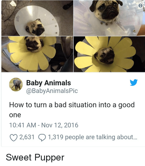 baby-animals-babyanimalspic-how-to-turn-a-bad-situation-into-31077241-1530213626099-1530213628041.png