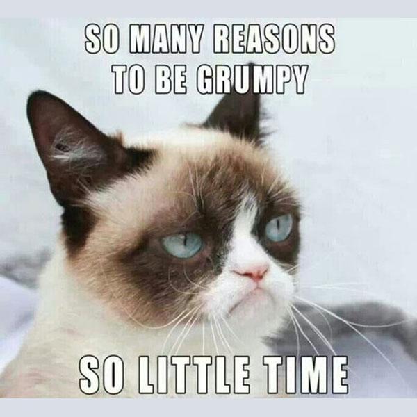 grumpy-cat-meme-00-1558090093155.jpg