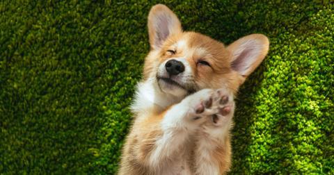puppymurdernetflixmovie-1600719250098.jpg