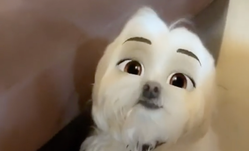 TikTok Disney Dog Challenge: What It Is, and How to Do It Yourself
