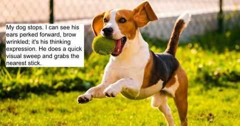 featured-dog-lied-1591116895681.jpg