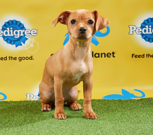 are-puppy-bowl-dogs-up-for-adoption-3-1548971943706-1548971946032.png