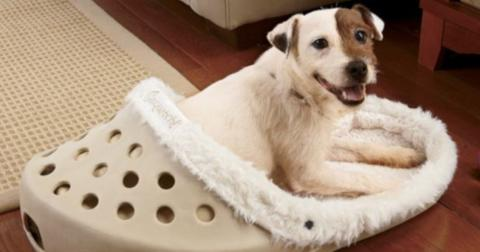 dog-shoe-bed-cover-1559566470319.jpg