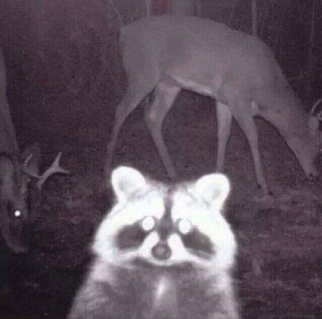 18-animal-photobomb-1559573706675.jpg