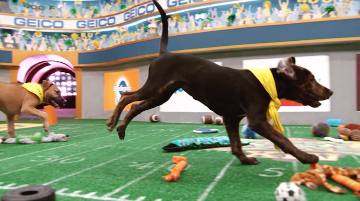 are-puppy-bowl-dogs-up-for-adoption-2-1548971635114-1548971638199.png