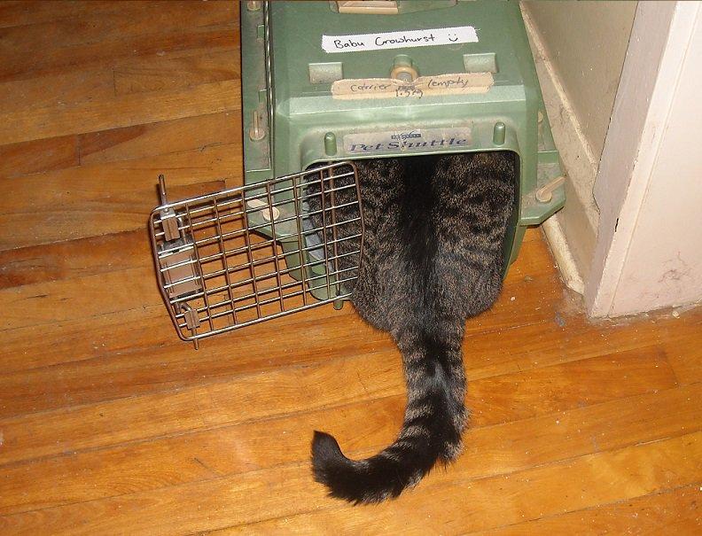 cat-vet-8-1545665905548.jpg