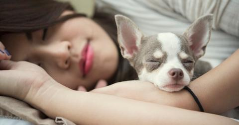 ralaxation-concept-beautiful-woman-sleeping-with-her-cute-dog-on-bed-picture-id1062402658-1555682501439.jpg