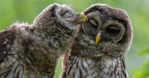 24-weird-couple-habits-1573845395002.jpg