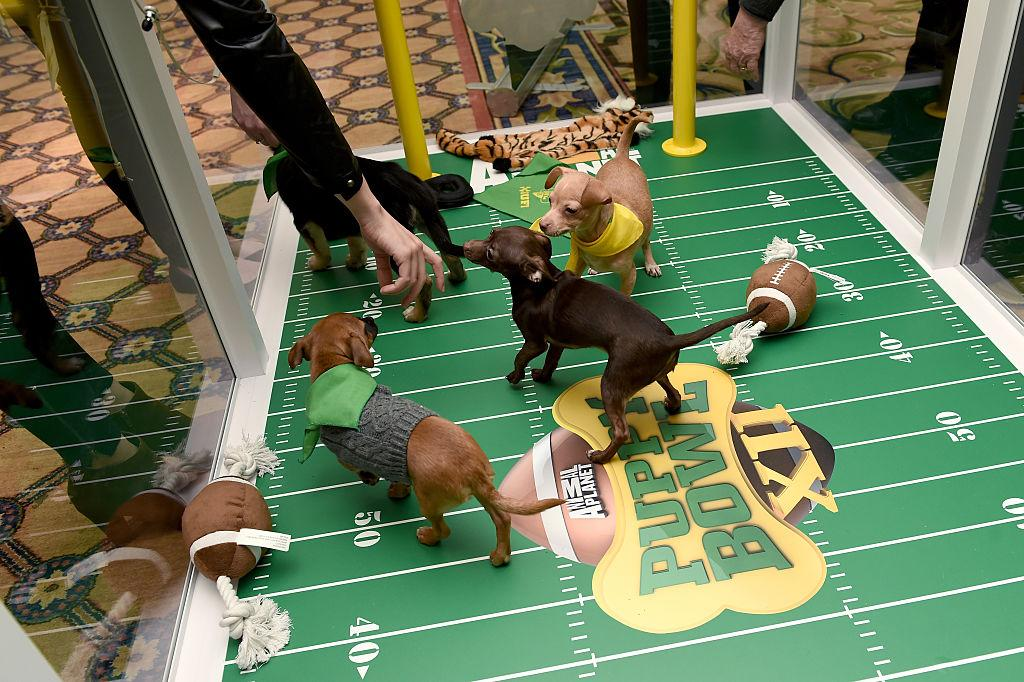are-puppy-bowl-dogs-up-for-adoption-3-1548971906990-1548971908912.jpg