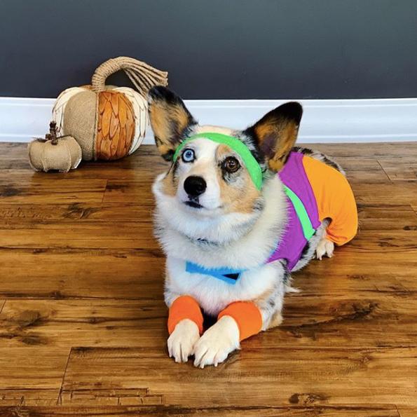 11-dog-costumes-1568997857703.jpg
