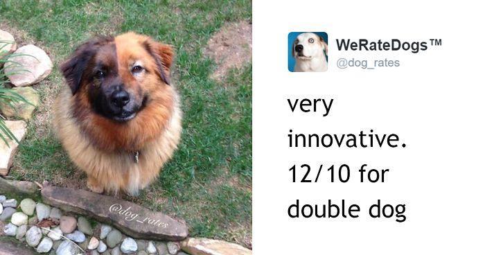 dog-rating-1547147323750.jpg