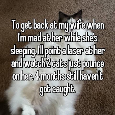 cat-involved-1556827620309.jpg