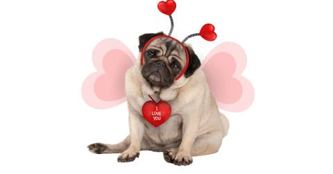 funny-valentines-messages-4-1581452841688.jpg