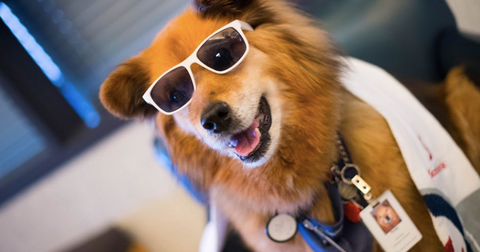 rusty-the-dog-feature-1582247860849.png
