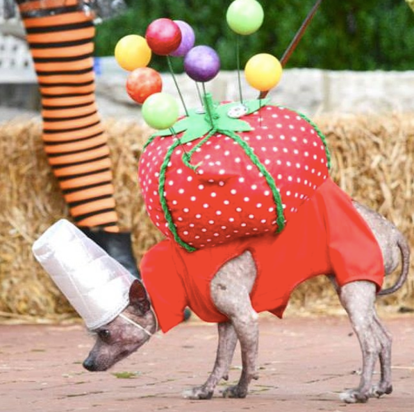 8-dog-costumes-1568997822668.jpg