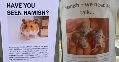 featured-hamster-posters-1602187021971.jpg