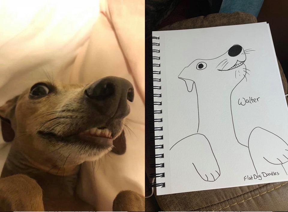 16-flat-dog-doodles-1567790718071.jpg