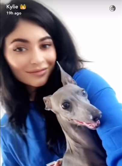 kylie-dog-1-1550861039574-1550861042445.PNG