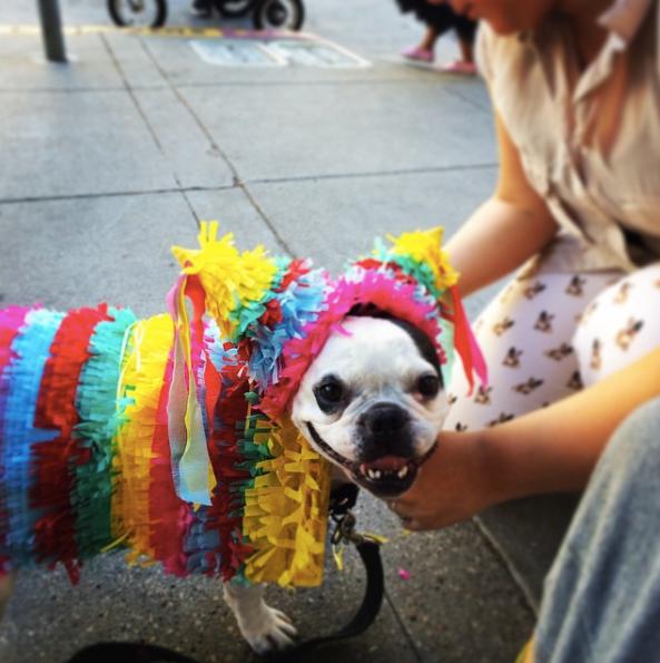 9-dog-costumes-1568997834575.jpg
