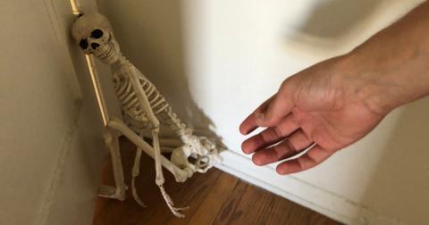 1-skeleton-pet-1570642192676.jpeg