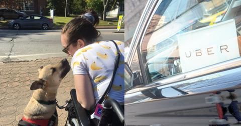 uber-wheelchair-service-dog-1579636727656.jpg