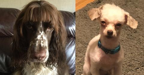 featured-dog-haircuts-1588866847469.jpg