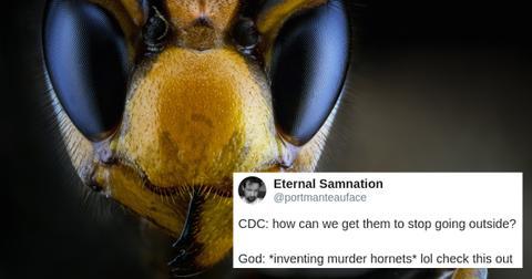 murder-hornet-giant-asian-cover-1588520540688.jpg