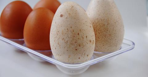 turkey-egg-vs-chicken-egg-1574796250129.jpg