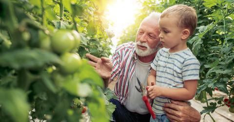 grandfather-and-grandson-in-greenhouse-picture-id998715988-1558539509950.jpg