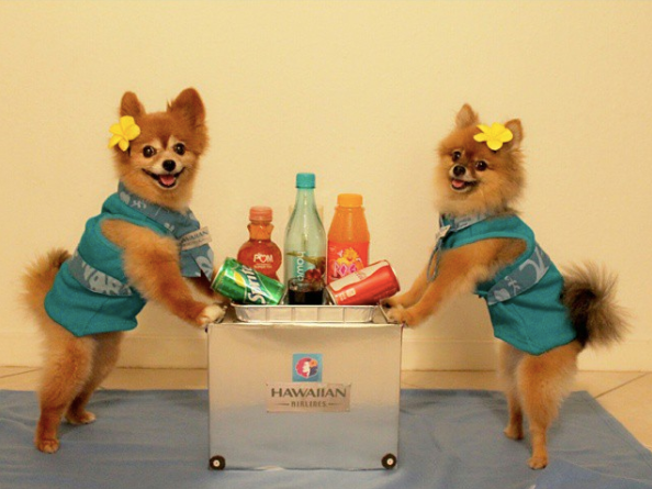 7-dog-costumes-1568997809906.jpg