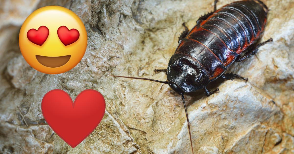 cockroach-piece-1549294747699-1549294750293.jpg