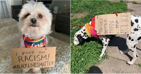featured-protest-dogs-1592246325878.jpg