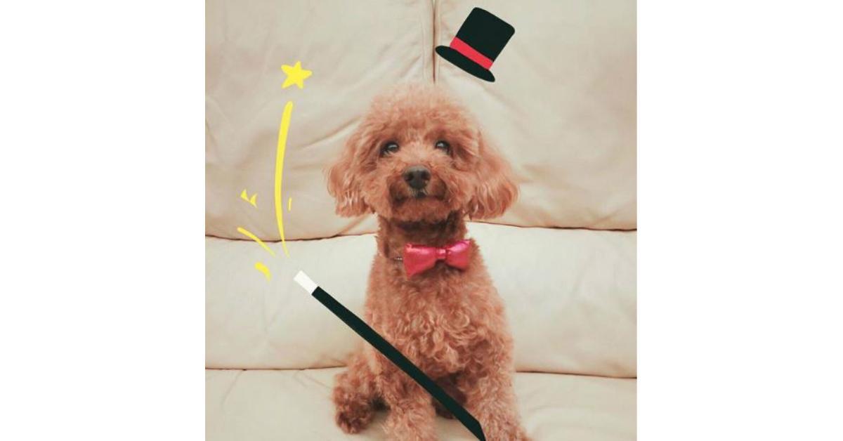 magiciandog-1534945558427-1534945560462.JPG
