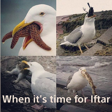 ramadan-memes-4-1557438181253.PNG