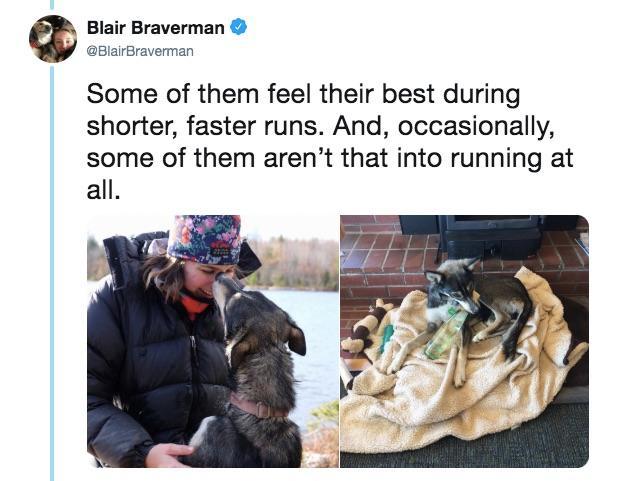 11-sled-dogs-1563217882384.jpg