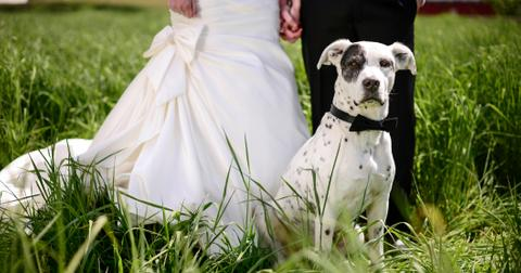 1-dog-ring-bearer-1571243542706.jpg