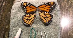 butterfly surgeon cover