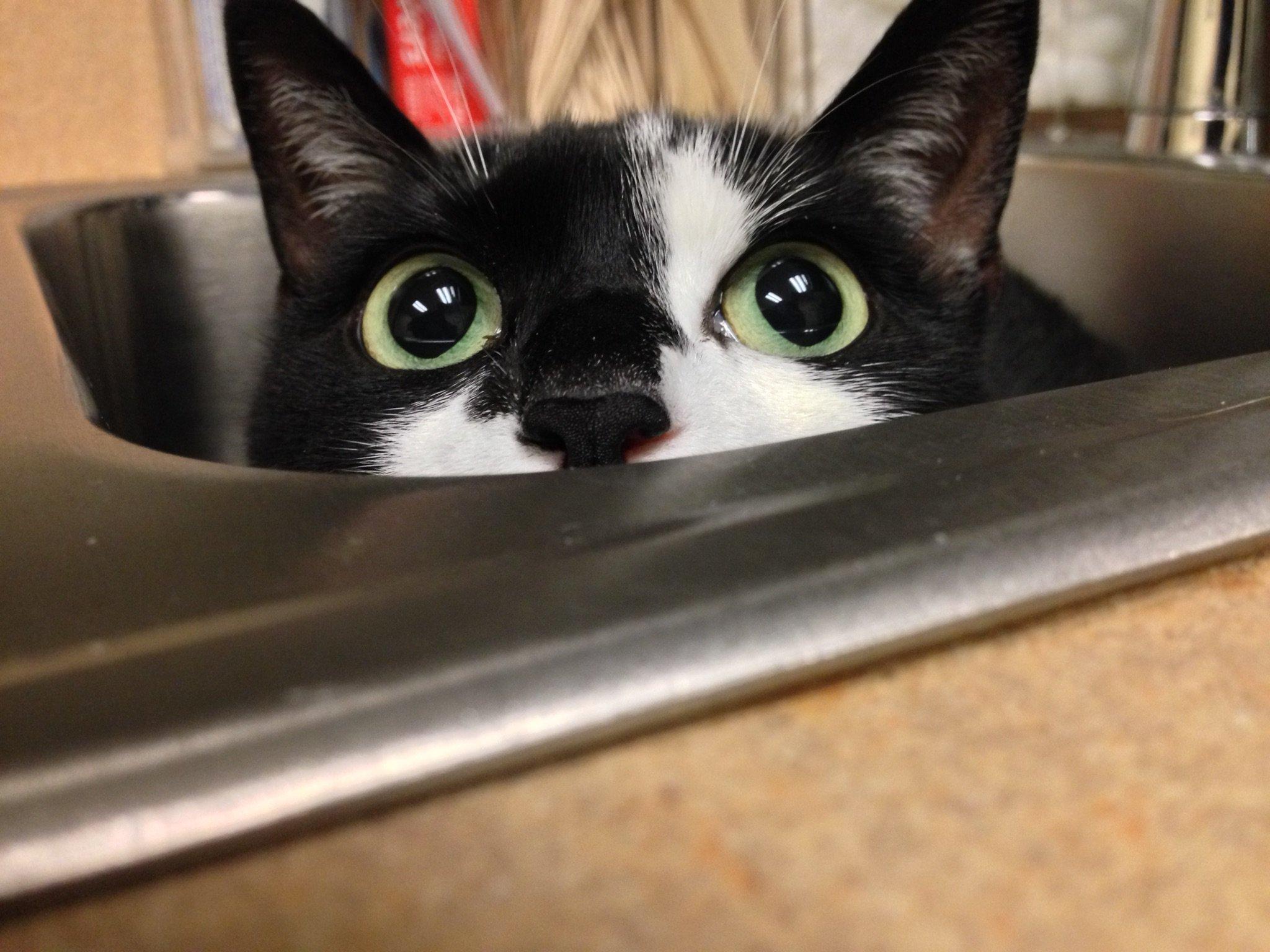 cat-vet-7-1545665828653.jpg