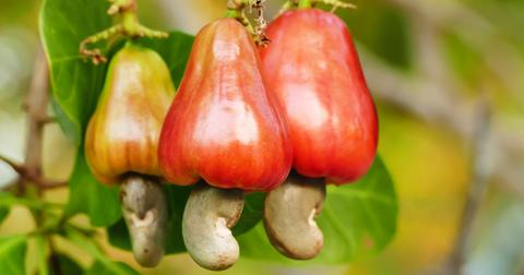 cashew-apple-1568295541632.jpg