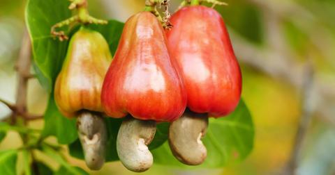 cashew-apple-1568295541632.jpg