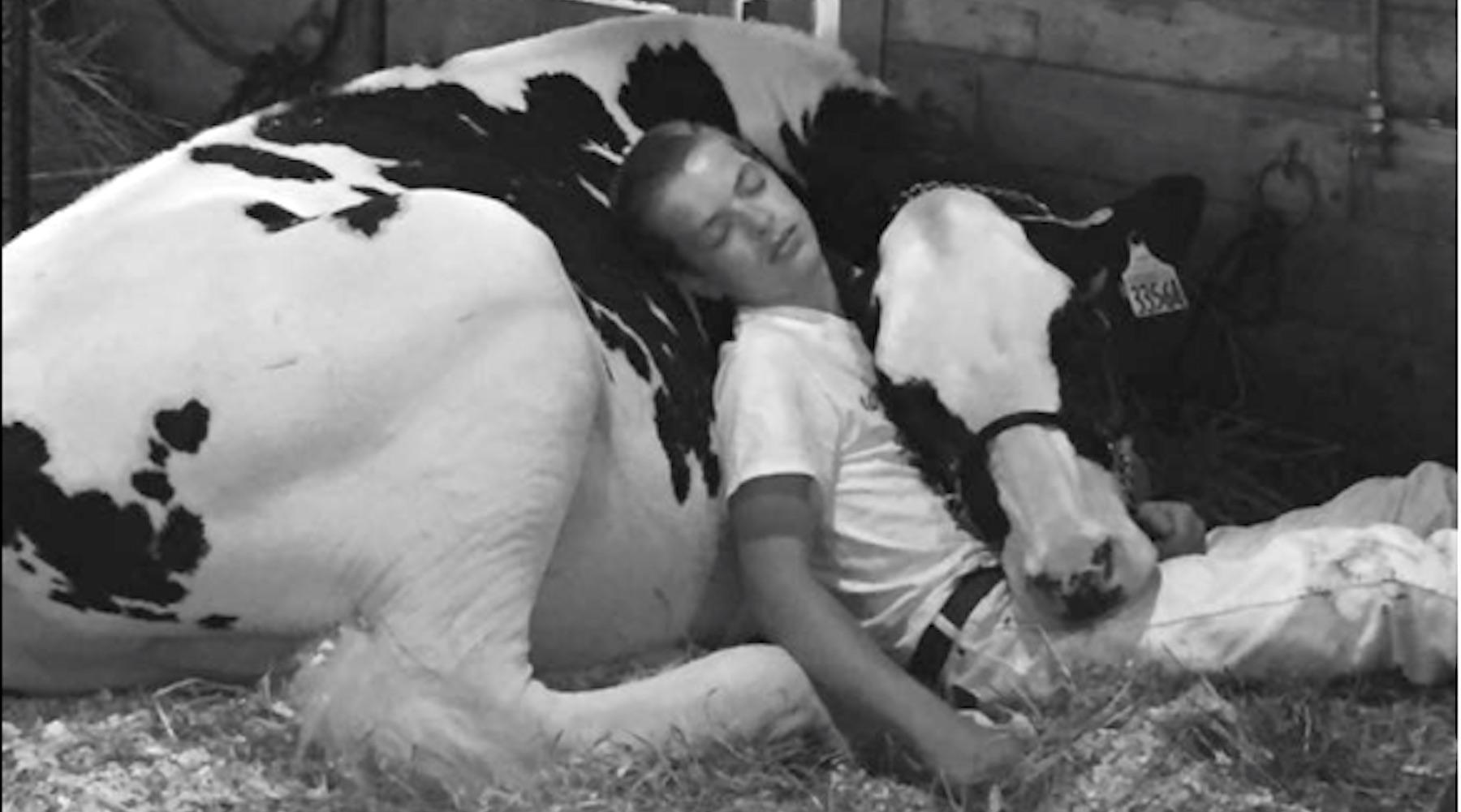 cow-1502813591754-1502813594036.jpg