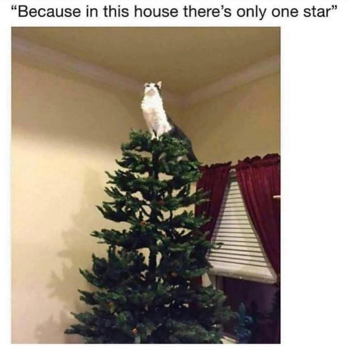 Christmas Memes.Merry Christmas Memes That Express The True Joy Of The Holiday