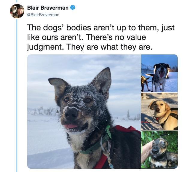 16-sled-dogs-1563217951849.jpg