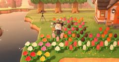 how to cross pollinate in animal crossing