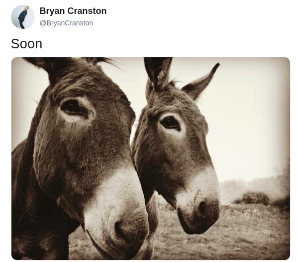 cranston-donkey-tweet-1-1561586209650.png