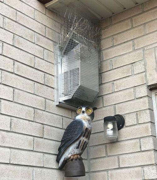 bird13-1532531241265-1532531243027.jpg