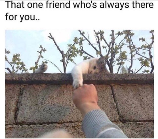 friendship-meme-7-1533237265848-1533237268425.PNG
