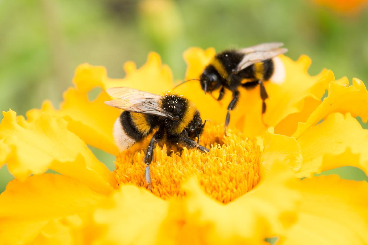 bees-1539378848625-1539378850767.jpg